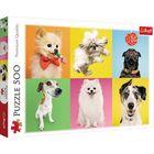 Câini puzzle cu 500 piese