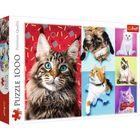 Pisici fericite puzzle cu 1000 piese