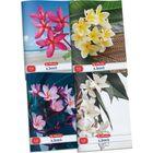 x.book: Flower sima füzet 80-32 - A4, többféle