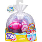 Little Live Pets: Bellariva úszkáló halacska, 11 cm