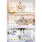 Herma: Etichete caiete cu model pisici