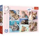 Trefl: Macskák puzzle - 100 darabos