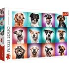 Trefl: Vicces kutyaportrék puzzle - 2000 darabos