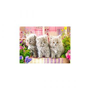Castorland: három szürke kiscica 300 darabos puzzle - . kép